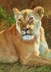 Lioness II by Tony Forrest -  sized 17x23 inches. Available from Whitewall Galleries